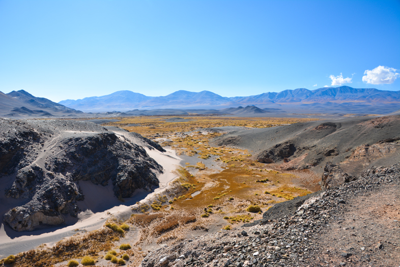 Antofagasta de la Sierra Catamarca Belen Argentine vallee buissons jaunes