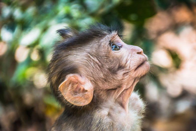 Bébé à la Monkey Forest à Ubud
