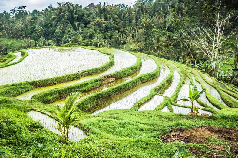 rizieres-de-jatiluwih-bali