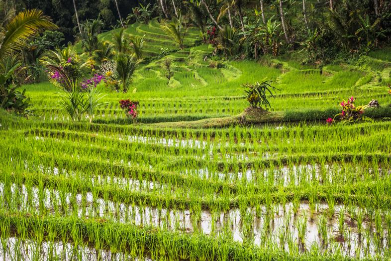 rizieres-de-jatiluwih-vue-angle-bali