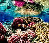 coral-garden-jemeluk-spot-snorkeling