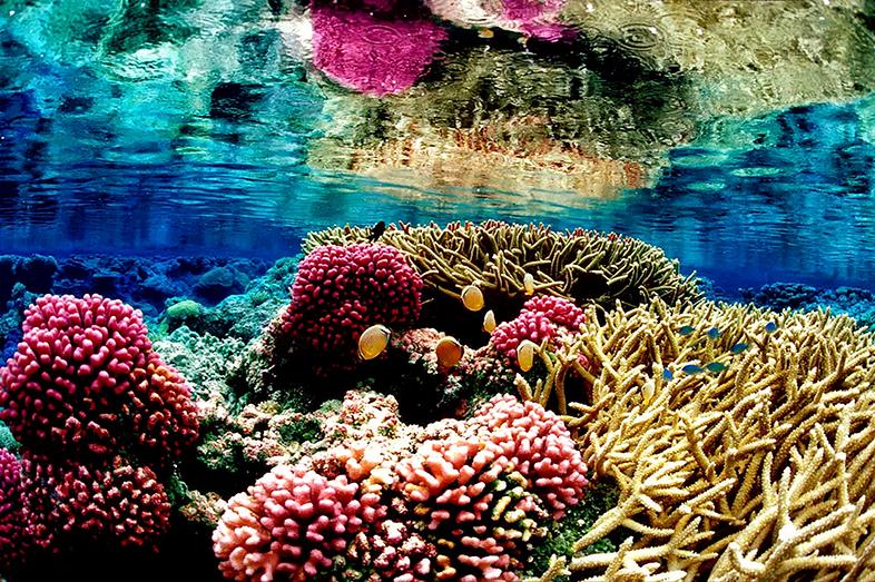coral-garden-amed-jemeluk-spot-snorkeling