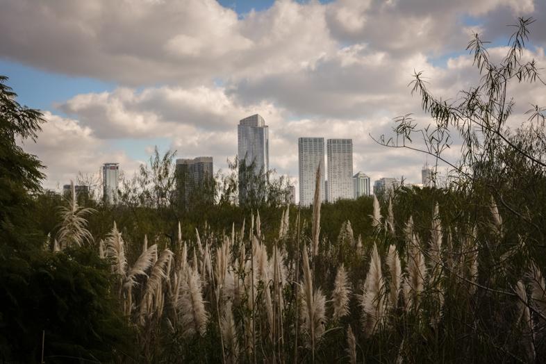 Vue sur la ville de Buenos Aires depuis la reserve ecologique reserva ecologica costanera sur en Argentine