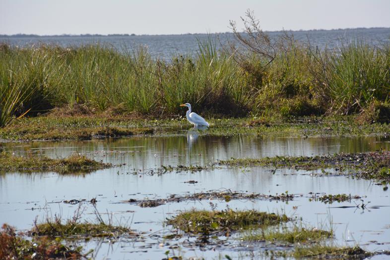El Estero del Ibera Argentine Carlos Pellegrini héron gris