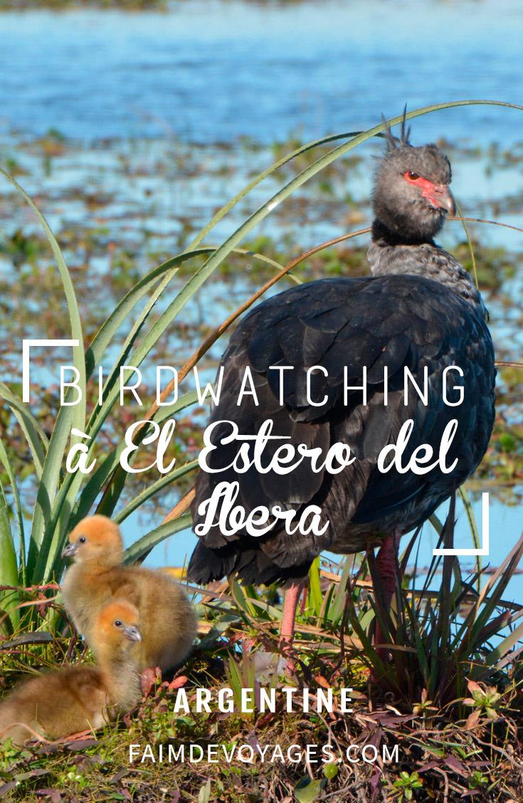 Birdwatching Estero