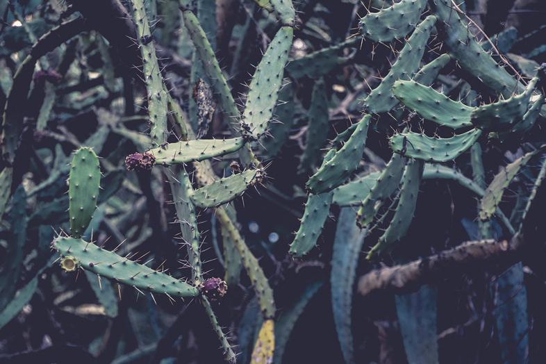 cactus jardin botanique serre buenos aires