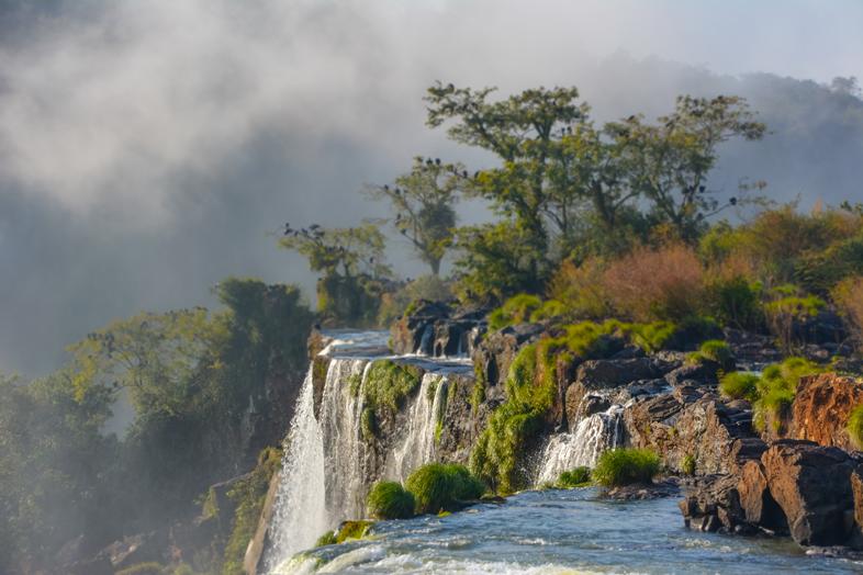 Brumes et vautours perchés au-dessus des chutes d'Iguazu du côté Argentin