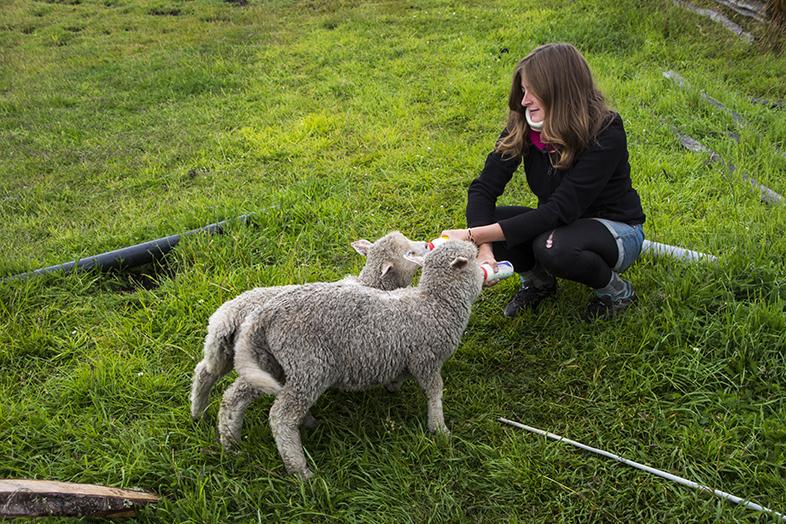 volontariat workaway puerto natales chili patagonie cecilia nourri les agneaux