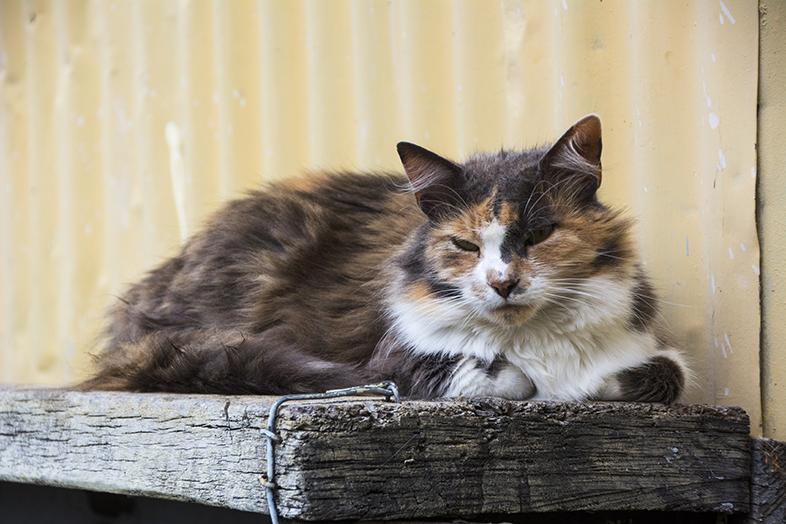 volontariat workaway puerto natales chili patagonie chat de la maison