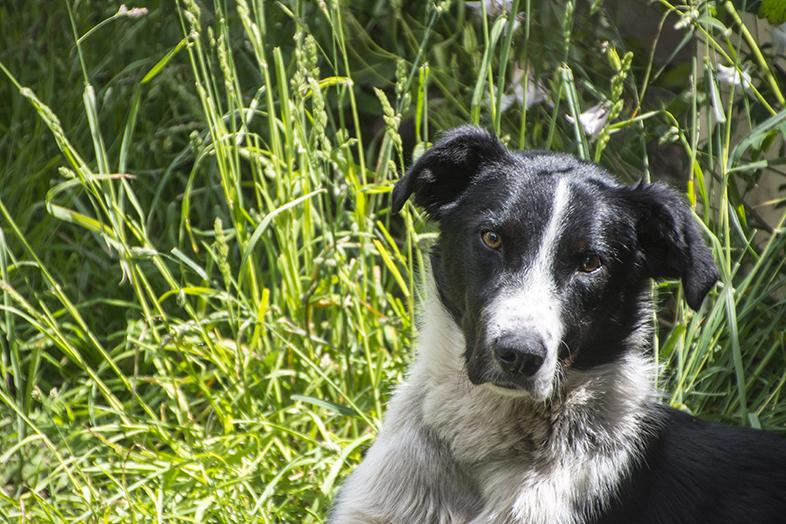 volontariat workaway puerto natales chili patagonie chien de travail coskin