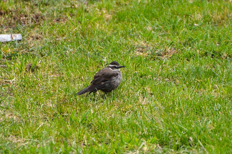 volontariat workaway puerto natales chili patagonie churrete oiseau