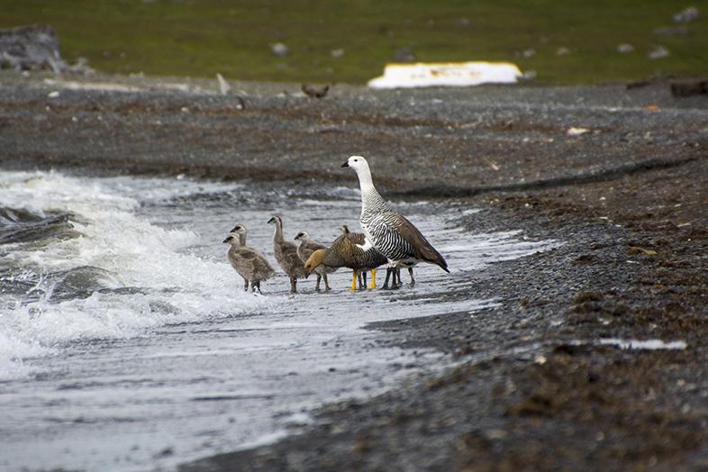volontariat workaway puerto natales chili patagonie famille de caiquen