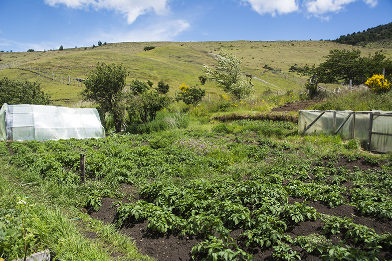 volontariat workaway puerto natales chili patagonie jardin et serre