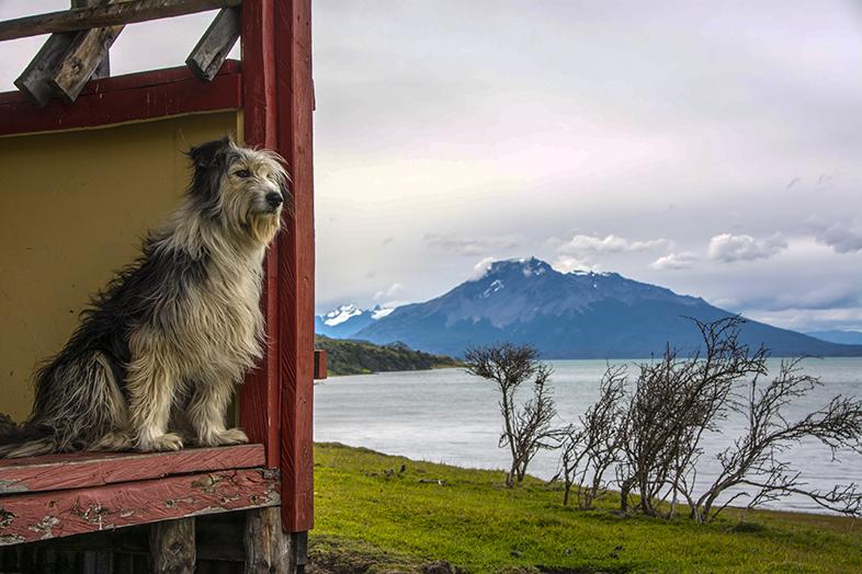 volontariat workaway puerto natales chili patagonie pluma gardienne de la cabane