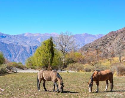 Quebrada de Humahuaca vue depuis juella – volontariat wwoofing-POSTSHOW