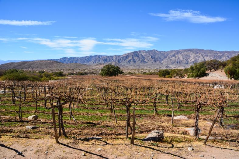 Roadtrip Salta Argentine boucle sud vignes bodega vin vignoble altitude