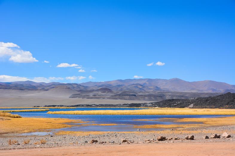 Antofagasta de la Sierra Catamarca Belen Argentine lagune et herbes jaunes