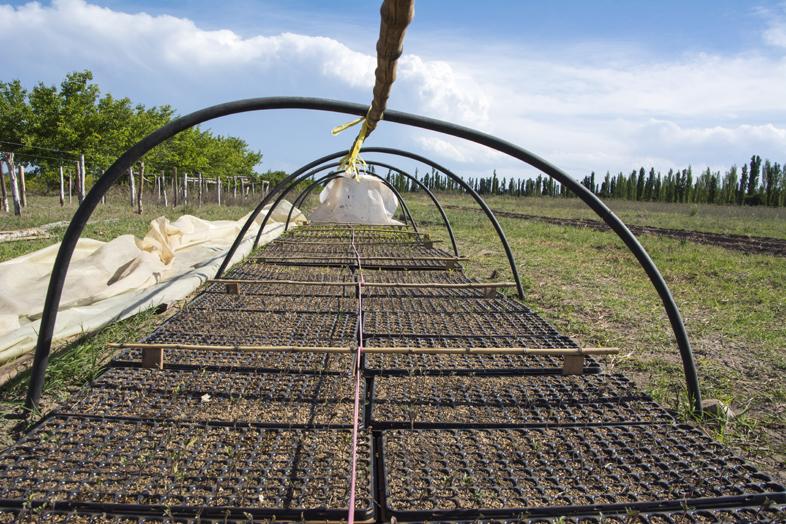 Wwoofing volontariat San Rafael Mendoza Argentine viticole vigne mini serre