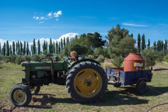 Wwoofing volontariat San Rafael Mendoza Argentine viticole vigne tim tracteur postshow