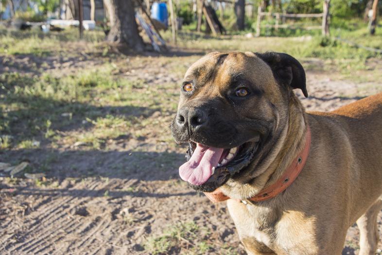 Wwoofing volontariat San Rafael Mendoza Argentine viticole vigne toto le chien