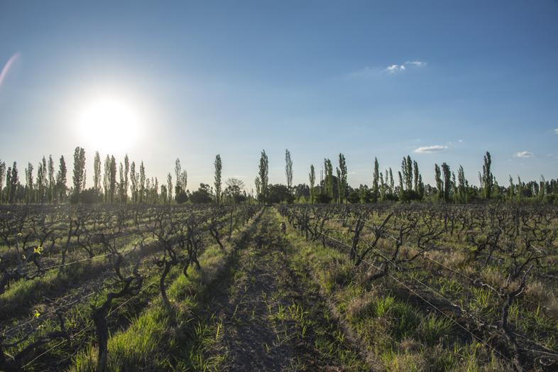 Wwoofing volontariat San Rafael Mendoza Argentine viticole vigne vue vignoble