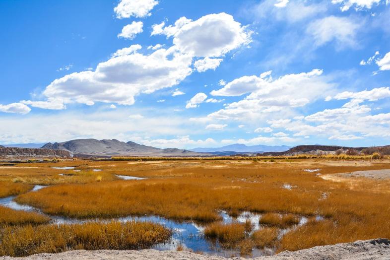 Ciel bleu et nuages sur un marais d'altitude et ses plantes jaunes