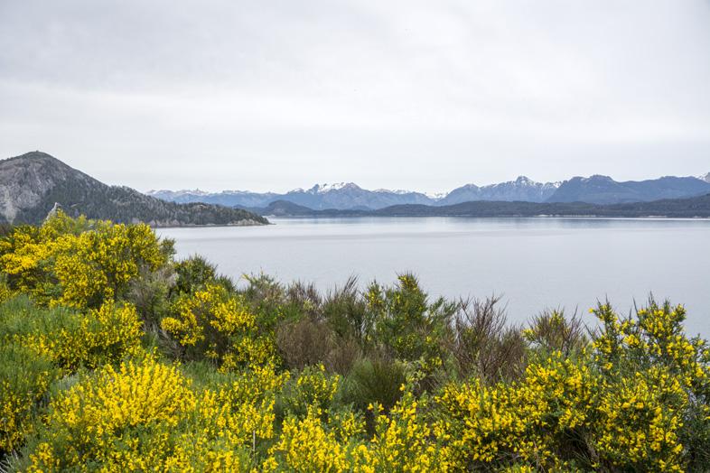 Bariloche a villa la Angostura route des 7 lacs Argentine fleurs et lac