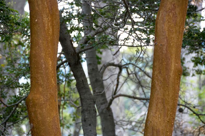 bosque arrayanes villa la angostura parc national argentine bois arrayan