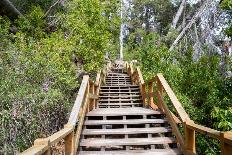 bosque arrayanes villa la angostura parc national argentine escalier passerelle
