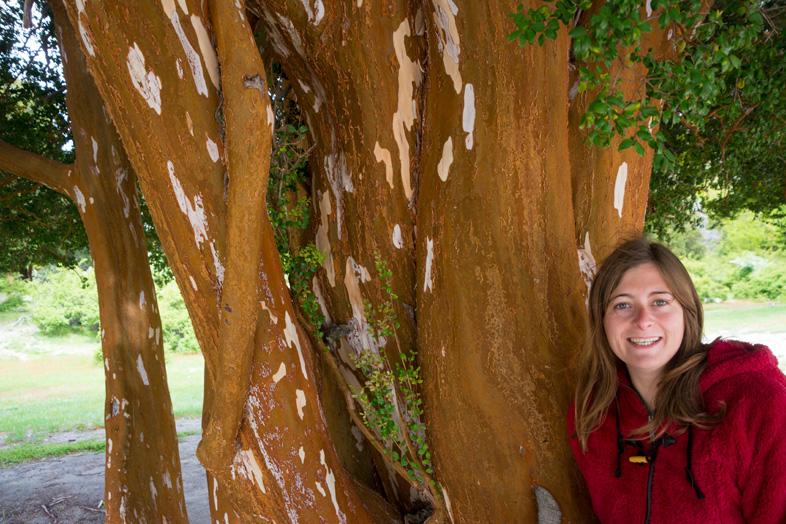 bosque arrayanes villa la angostura parc national argentine foret arrayan cecilia