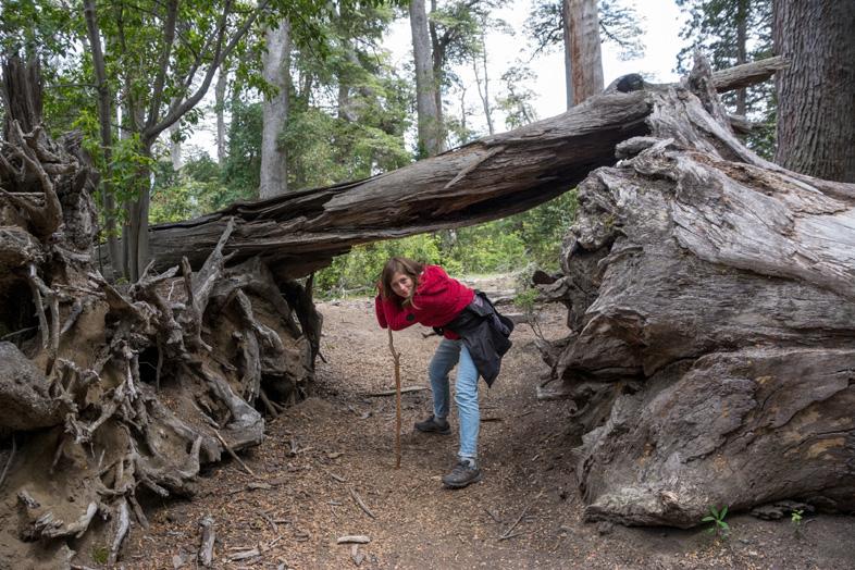 bosque arrayanes villa la angostura parc national argentine foret cecilia pose