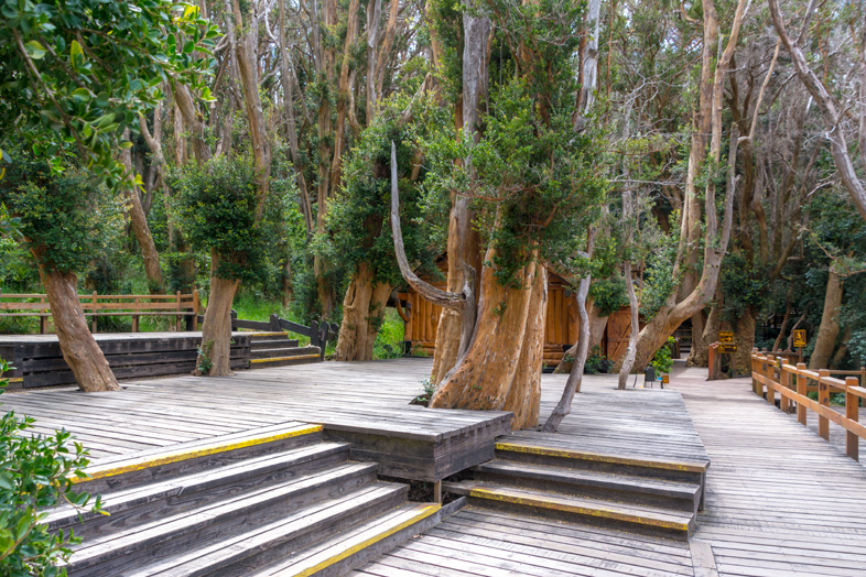 bosque arrayanes villa la angostura parc national argentine passerelles
