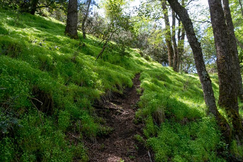 san-martin-de-los-andes-chemin-randonnee-trekking-islita