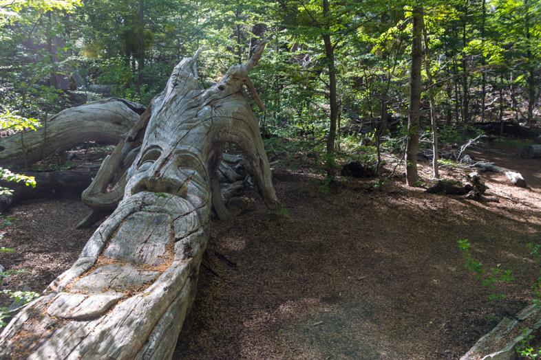 Arbre scultpé dans le bosque tallado cerro piltriquitron el bolson argentine