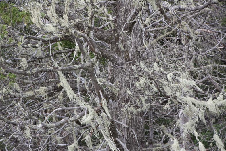 parque-cerro-llao-llao-bariloche-randonnee-trekking-argentine-plantes-bambou