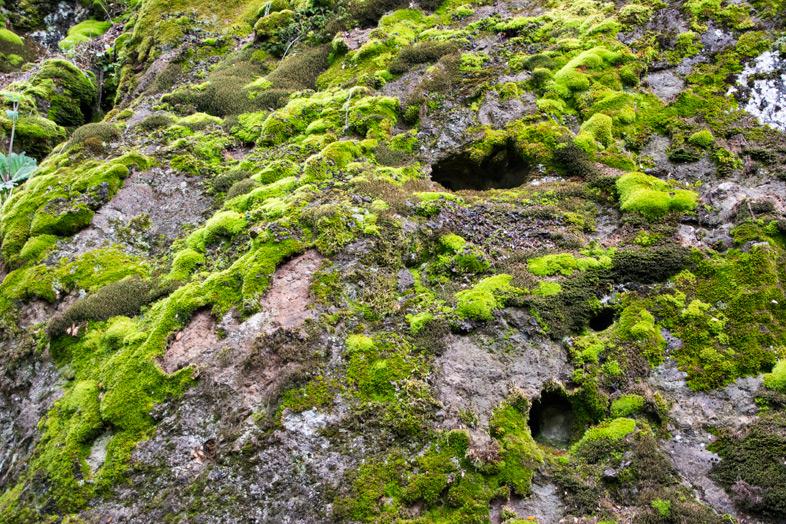 parque-cerro-llao-llao-bariloche-randonnee-trekking-argentine-vegetation