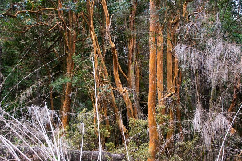 parque llao llao bariloche randonnee trekking argentine bosque arrayanes