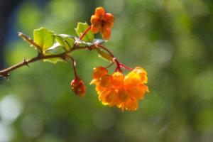 parque llao llao bariloche randonnee trekking argentine fleurs oranges