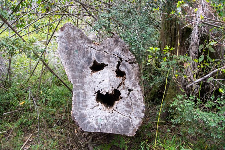 parque llao llao bariloche randonnee trekking argentine tronc smiley