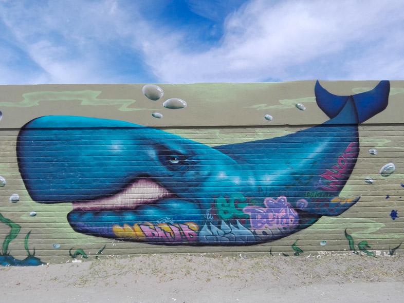 peninsule valdes argentine animaux faune graffiti baleine