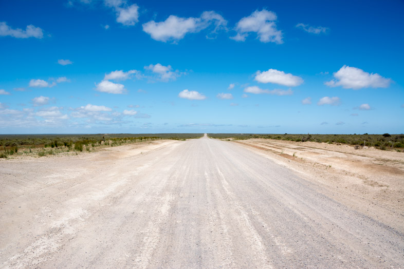 peninsule valdes argentine animaux faune route
