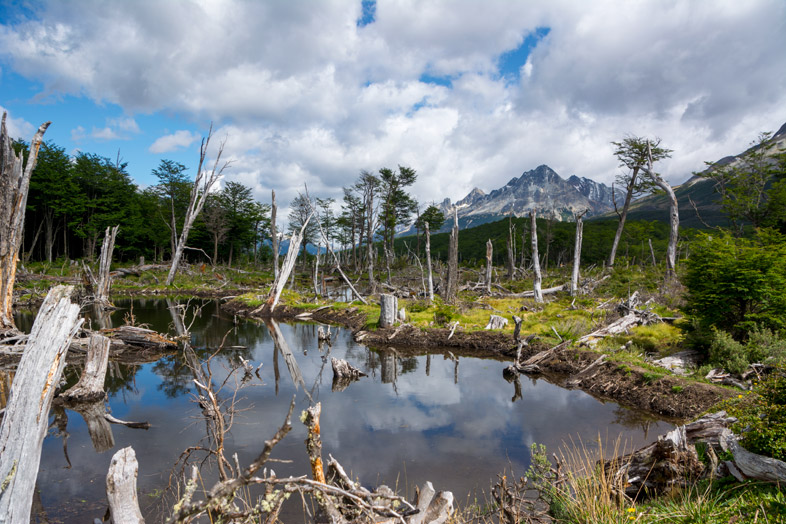 barrage de casto catorera sur le chemin de laguna esmeralda randonnee trek Ushuaia patagonie argentine