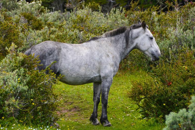cheval seul dans la foret trek ushuaia argentine