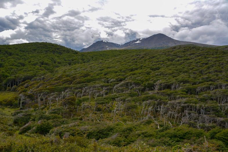 foret de lenga arbres deformes par le vent randonnee trek ushuaia argentine