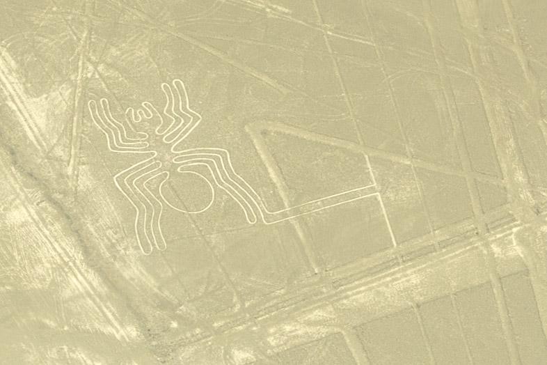 araignee tarentule mygale lignes de nazca perou voyage