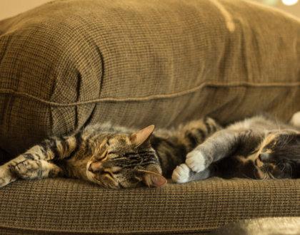 postshow couchsurfing astuce profil debutant