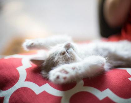postshow hote ideal couchsurfing conseil