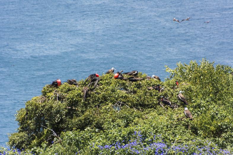 puerto lopez isla de la plata fregate equateur excursion