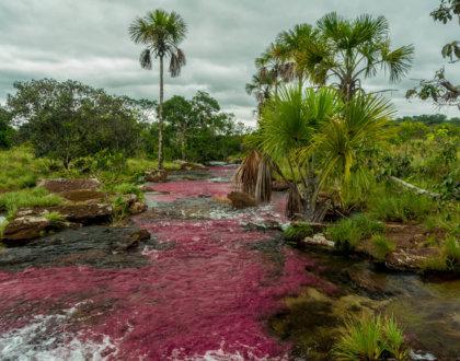 cano sabana riviere rose alternative cano cristales macarenia clavigera tranquilandia san jose del guaviare colombie postshow