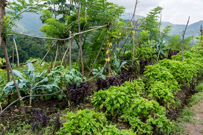 Le potager en permaculture de Mundo Nuevo à Minca en Colombie